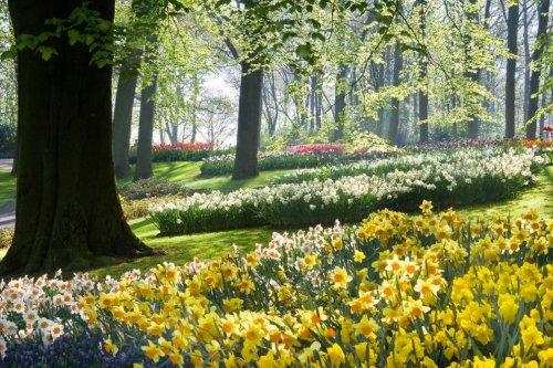 Весенняя красота природы в разных уголках планеты (14 фото)