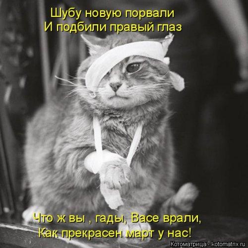 Свежая котоматрица для всех (20 шт)