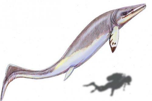 Топ-10: жуткие животные, жившие на Земле еще до динозавров