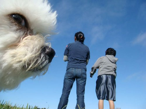 Весёлые фотобомбы с собаками (21 фото)