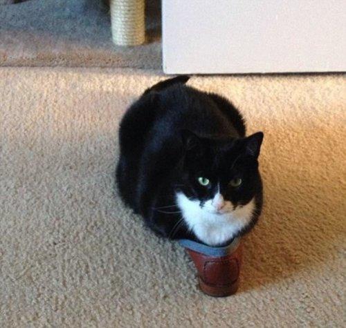 Кошки, которым комфортно ВЕЗДЕ (26 фото)