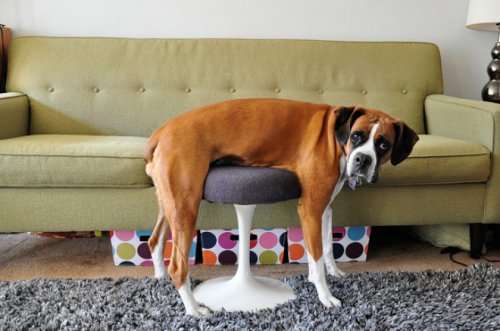 Фотоприколы про непростые взаимоотношения между животными и мебелью (17 фото)