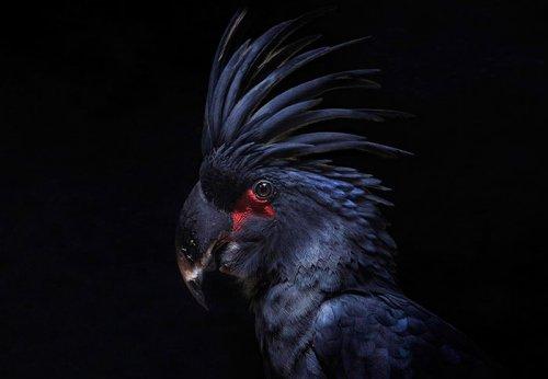 Животные, которые выглядят, как настоящие рокеры (24 фото)