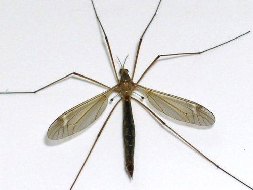 Топ-25: самые большие насекомые, от вида которых захватывает дух