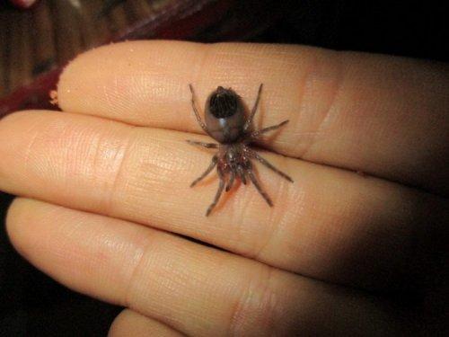 Эта женщина живет под одной крышей с 1500 домашними тарантулами