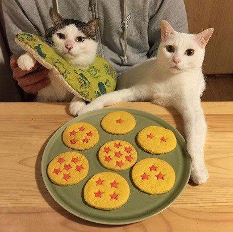 Довольные кошки, выигравшие джекпот (10 фото)