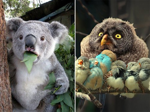 Забавные животные, удивлению которых нет предела (17 фото)