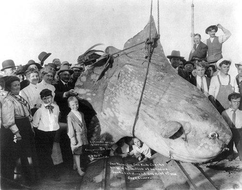 Топ-25: самые жуткие существа, которые когда-либо попадались морякам и рыбакам