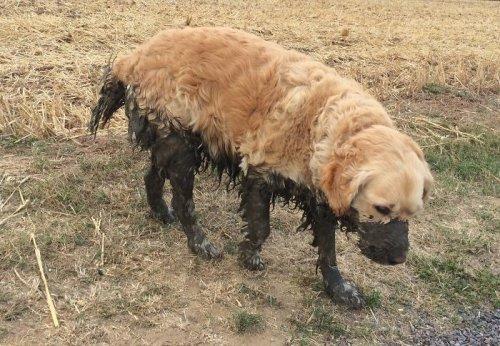 Убедительные причины, по которым собакам нельзя разрешать играться в грязи (23 фото)