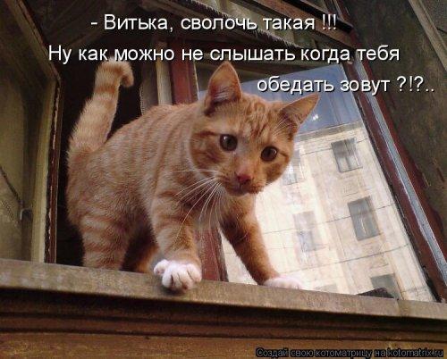 Свежая котоматрица для позитива (19 фото)