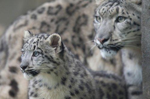 Очаровательные детёныши со своими мамами (20 фото)