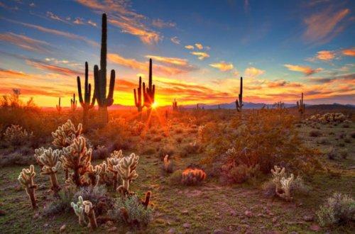 Топ-10: самые удивительные факты про растения
