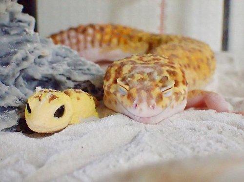 Самый улыбчивый геккон, который поднимет вам настроение (9 фото)