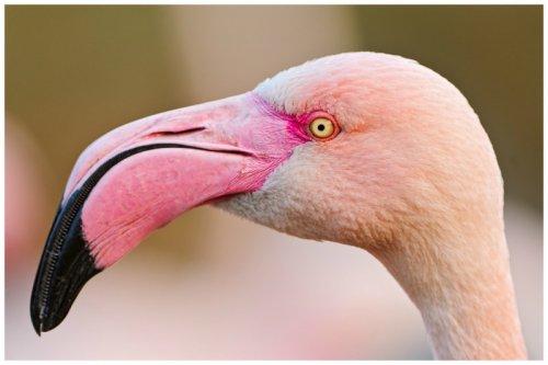 Птицы с необычными клювами (15 фото)