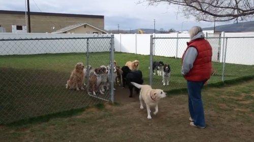 Собаки терпеливо ждут, когда каждую позовут по имени
