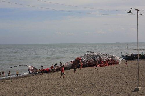 """""""Мёртвый кит"""" на филиппинском побережье как предостережение об угрозе гибели океана (7 фото)"""