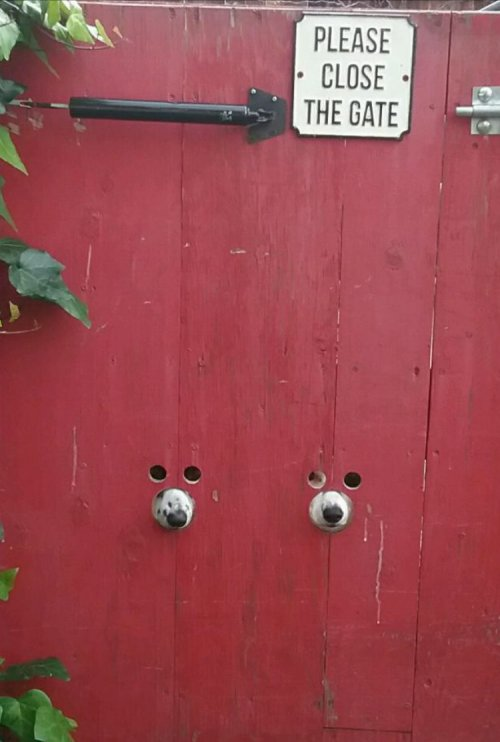 Забавные животные, которые подарят вам улыбку (20 фото)