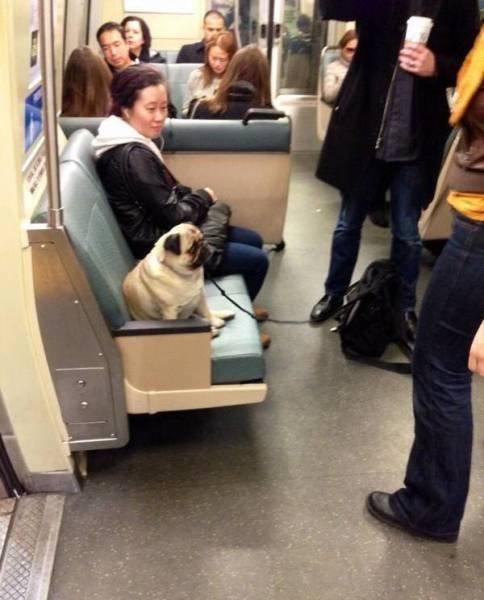 Странные пассажиры в общественном транспорте (17 фото)