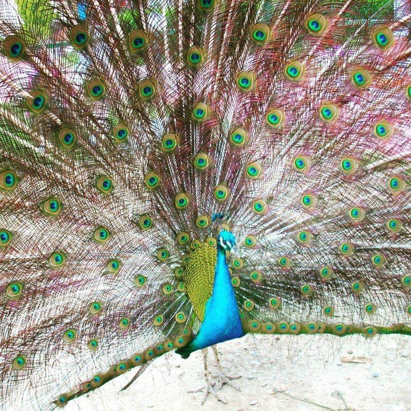 Перфекционизм в природе (14 фото)