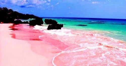 Топ-10: самые невероятные чудеса природы розового цвета