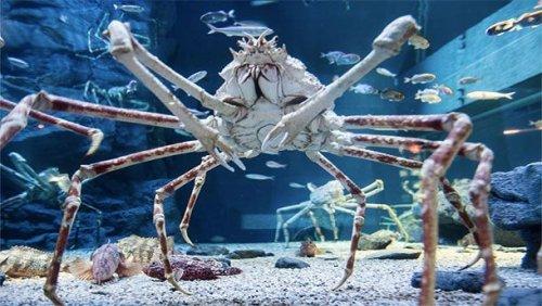 Топ-25: удивительные гиганты животного мира