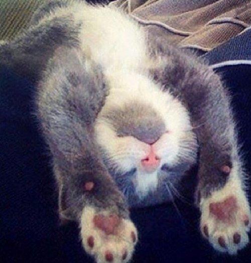 Кошки, заснувшие как попало (10 фото)