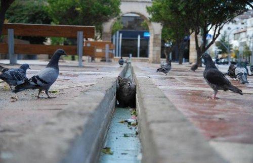 Кошки-партизанки, которые за всеми следят (26 фото)