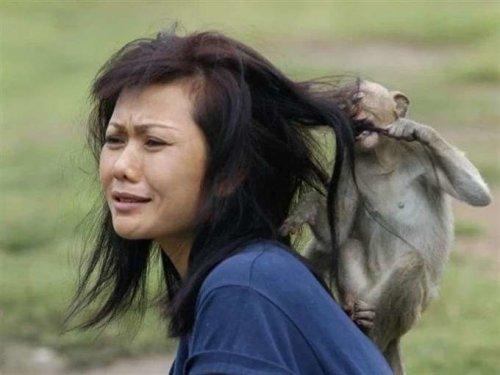 Животные, которые за что-то невзлюбили женщин (20 фото)