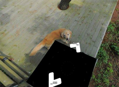 В Южной Корее пёс следовал за фотографом Google Street View, каждый раз попадая в кадр (10 фото)