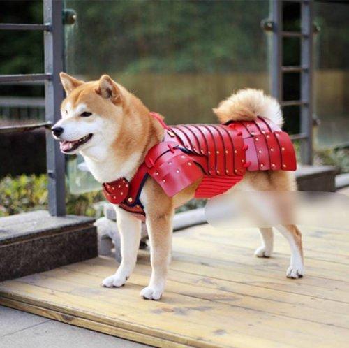 Доспехи для кошек и собак от японской компании Samurai Age (13 фото)