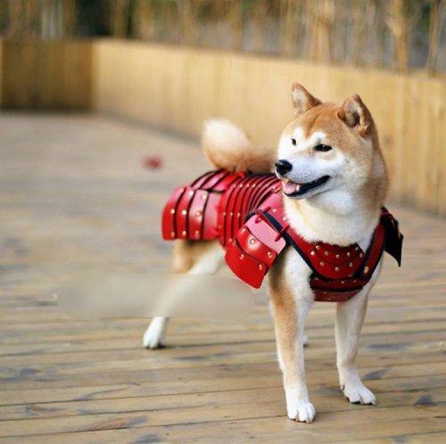 Японские доспехи для животных)))
