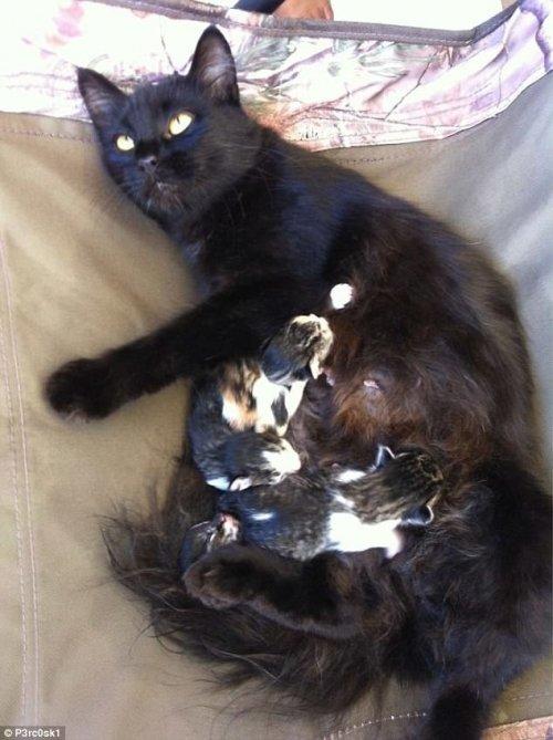 Забавные кошки, которые поднимут вам настроение (28 фото)