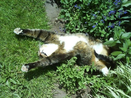 Смешные кошки, ловящие кайф от кошачьей мяты (28 фото)