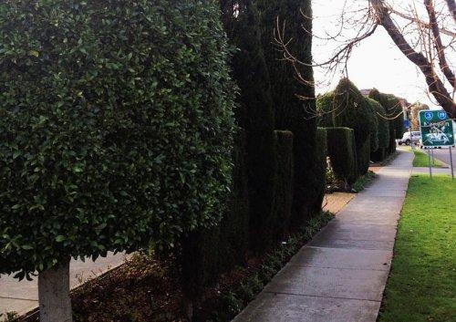 Весёлый садовник, покоривший Интернет (4 фото)