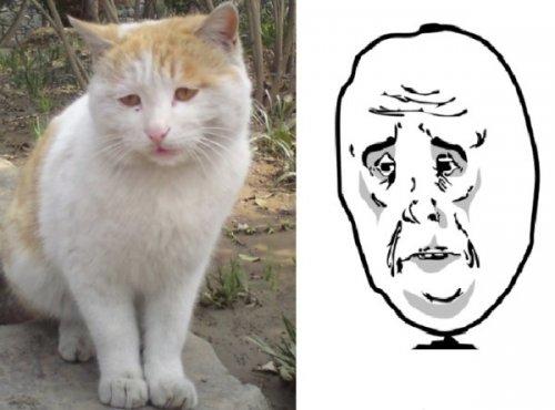 Кошки, похожие на популярные мемы (10 фото)