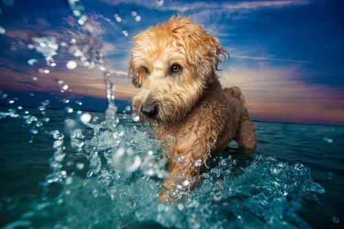 Фотографии-победители конкурса Kennel Club Dog Photographer Of The Year (30 фото)