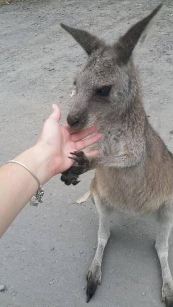 Тем временем в Австралии (20 фото)