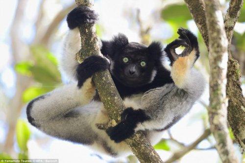 Смешные фотографии с животными, присланные на фотоконкурс Comedy Wildlife Photography Awards 2017 (14 фото)