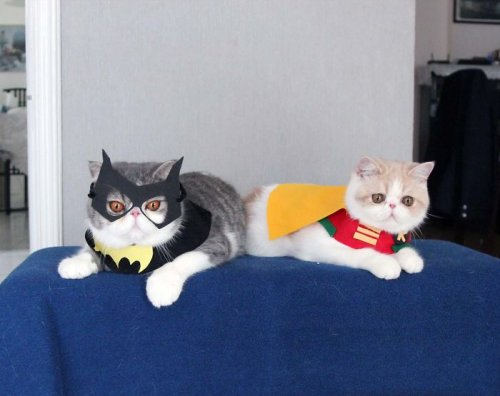 Кот-косплейщик Снупи и его друг Доби (26 фото)