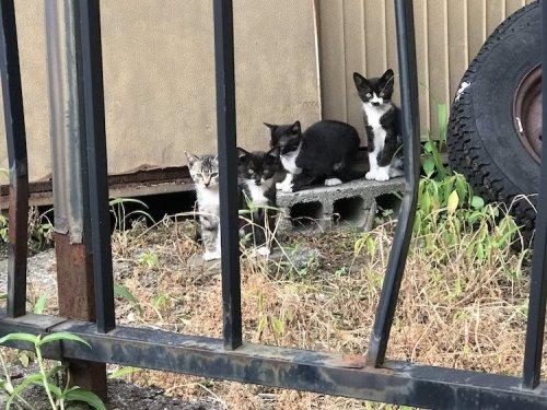 Очаровательная кошка с необычным окрасом на мордочке в виде кошки (4 фото)