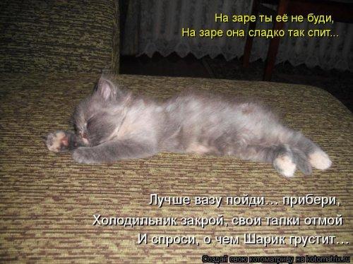 Новая котоматрица на Бугаге (30 фото)