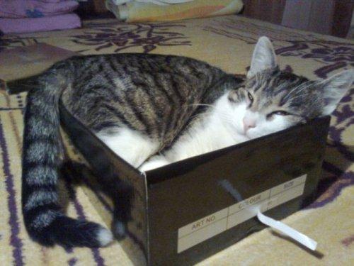 Кошки, которым удобно везде (37 фото)