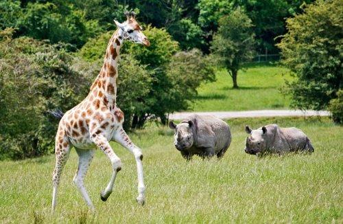 Крупнейший в Европе сафари-парк открылся в графстве Кент (7 фото)