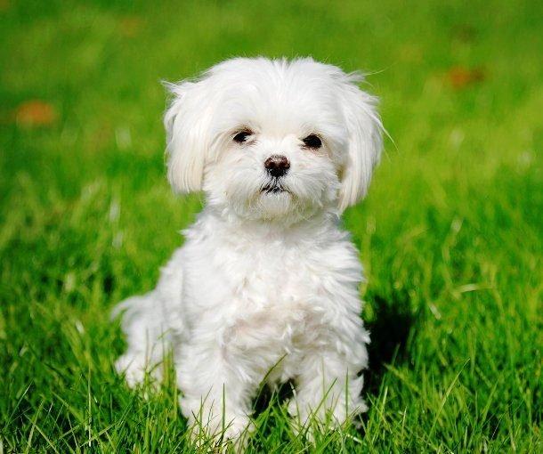 небольшие красивые собаки