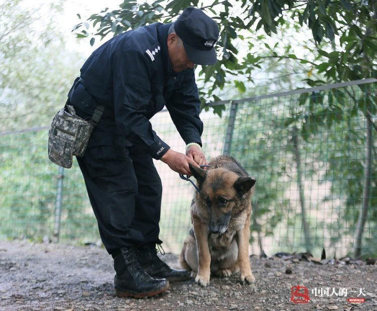 Дом престарелых собак дом престарелых в опочке псковской области