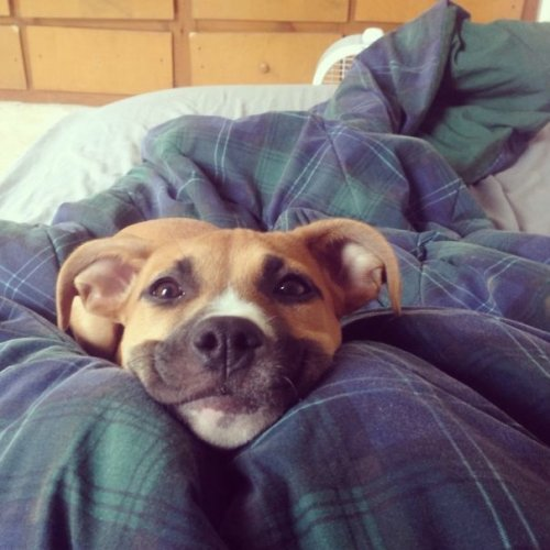 Как начинается утро владельцев домашних животных (33 фото)