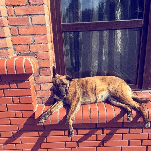 Собаки, которые думают, что они — кошки (31 фото)