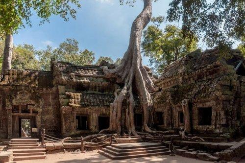 Удивительные деревья с невероятной волей к жизни (10 фото)