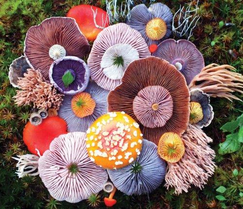 Яркие грибные композиции в фотографиях Джилл Блисс (7 фото)