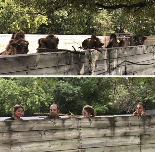 Смотрители зоопарка копируют своих подопечных (16 фото)